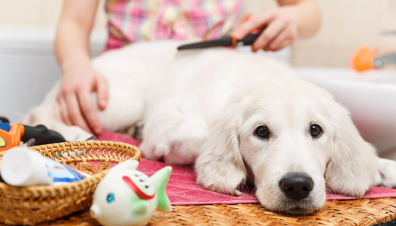 Grooming software for pets