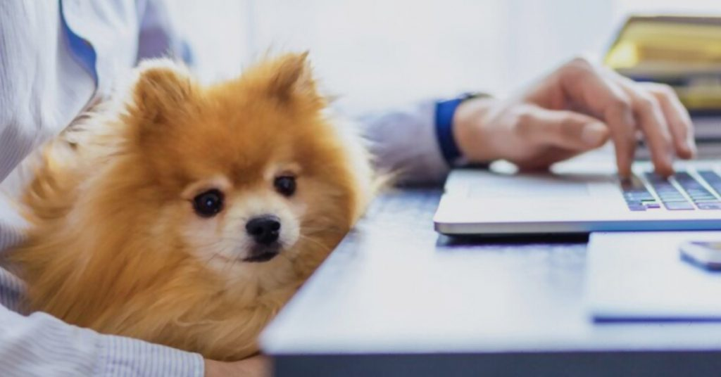 Pet Business Starter Guide with Kennel Booking Software