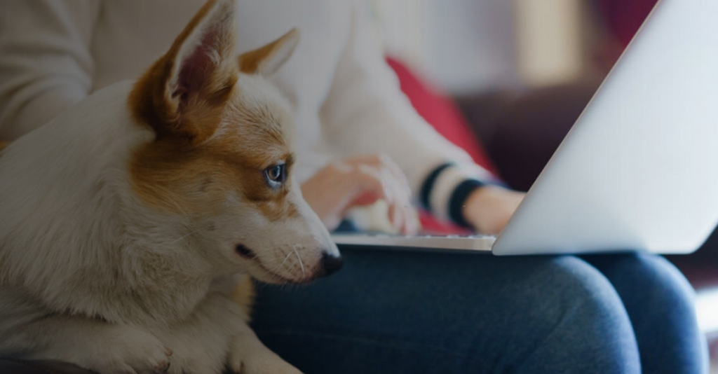 Effective Strategies to Boost Your Pet Boarding Business with Dog Boarding Software Systems