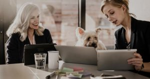 How to start pet daycare software
