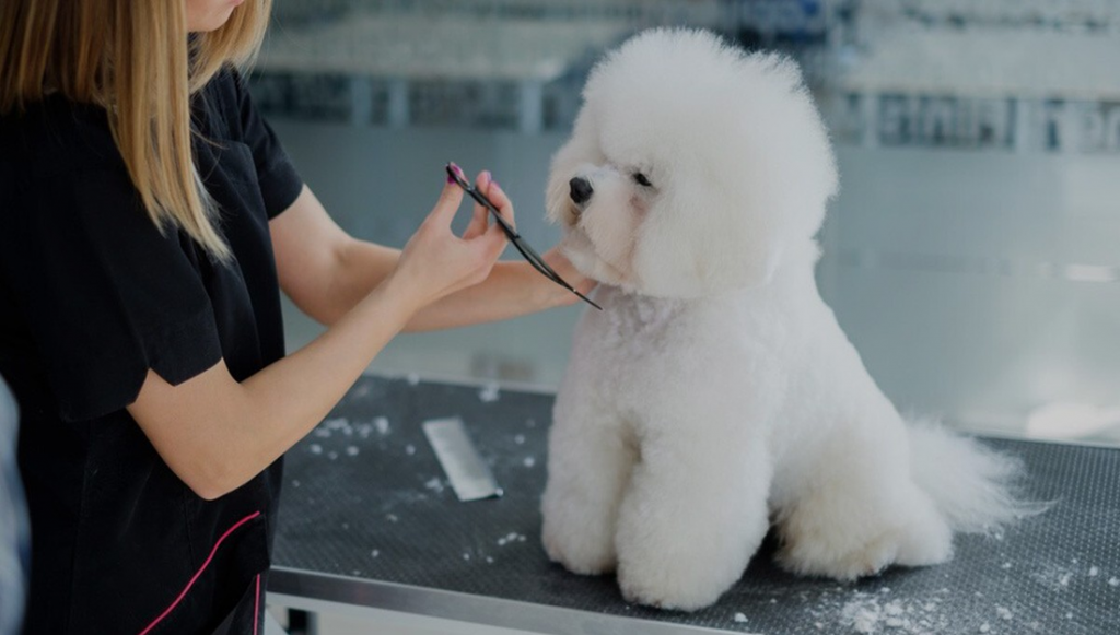 How and Why Should We Register a Pet Grooming Business?